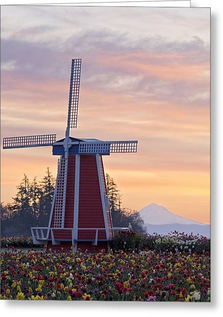 Spring Bulbs Greeting Cards - Sunrise Over Wooden Shoe Tulip Farm And Greeting Card by Dan Sherwood