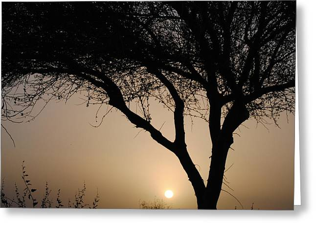 Edward Curtis Greeting Cards - Sunrise silhouette 1 Greeting Card by Edward Curtis