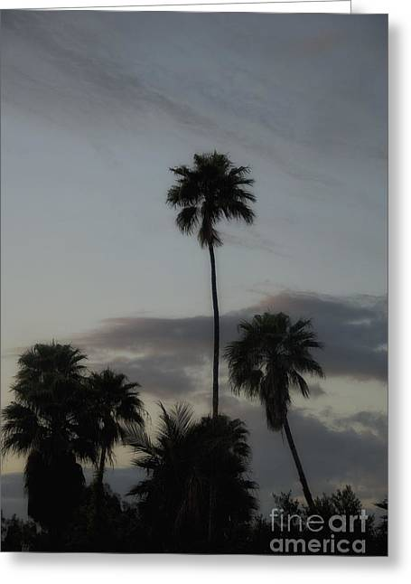 Subtle Colors Greeting Cards - Sunrise Silhouette of Palm Trees Greeting Card by Birgit Tyrrell