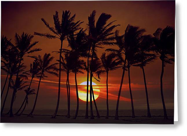 Reflecting Water Pyrography Greeting Cards - Sunrise Silhouette of Tall Palm Trees  Greeting Card by Katrina Brown