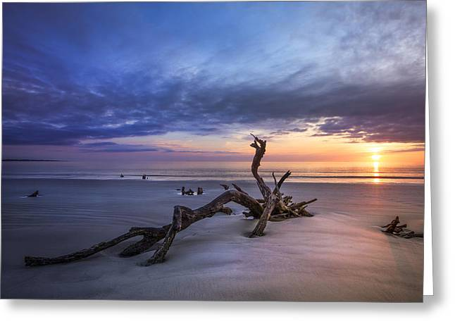 Tree Roots Art Greeting Cards - Sunrise Slumber Greeting Card by Debra and Dave Vanderlaan