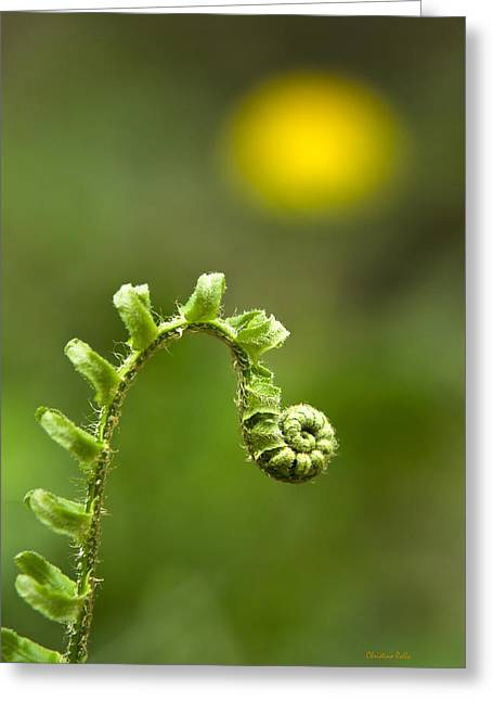 Unfold Greeting Cards - Sunrise Spiral Fern Greeting Card by Christina Rollo