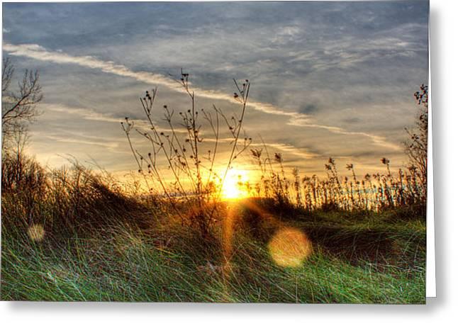 Sunrise Through Grass Greeting Card by Tim Buisman