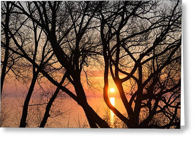 Willow Lake Greeting Cards - Sunrise Through the Chaos of Willow Branches Greeting Card by Georgia Mizuleva
