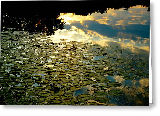 Lilly Pads Greeting Cards - Sunrise Greeting Card by Wendell Lowe