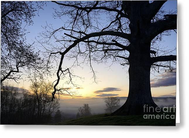 Colorful Cloud Formations Greeting Cards - Sunrise White Oak and Fog Greeting Card by Thomas R Fletcher
