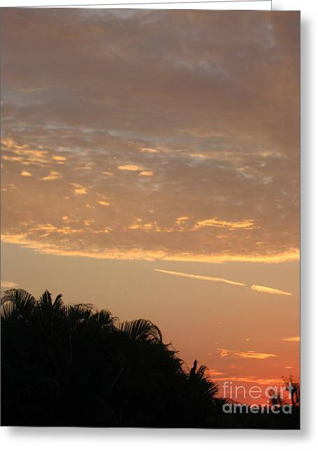 Photo Art Gallery Greeting Cards - Sunrise41. Florida Greeting Card by Oksana Semenchenko