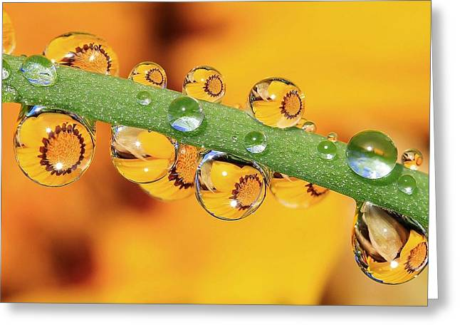 Dewdrops Greeting Cards - Sunrises Sunsets Greeting Card by Gary Yost