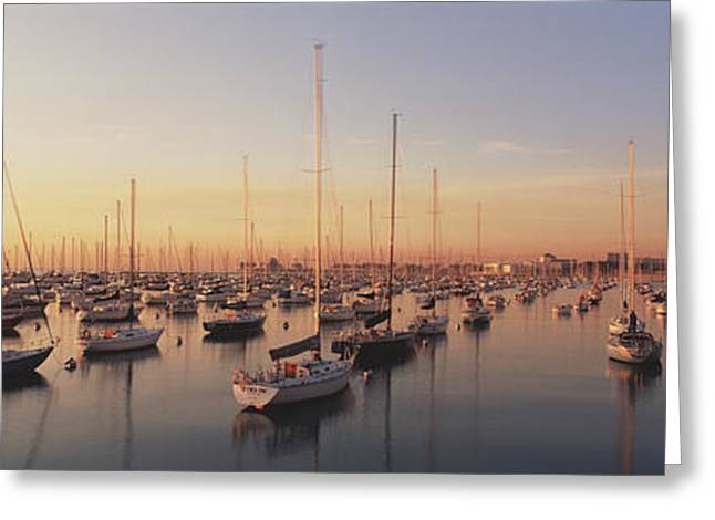 Sailboats Docked Greeting Cards - Sunset & Harbor Chicago Il Usa Greeting Card by Panoramic Images
