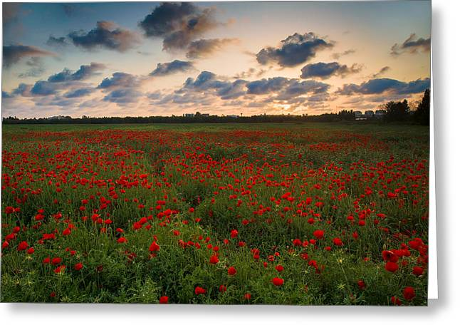 Hdr Greeting Cards - Sunset and Poppies Greeting Card by Meir Ezrachi
