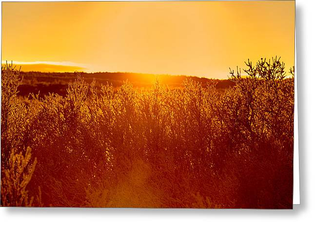 World Locations Greeting Cards - Sunset And Trees In The Frozen Greeting Card by Panoramic Images