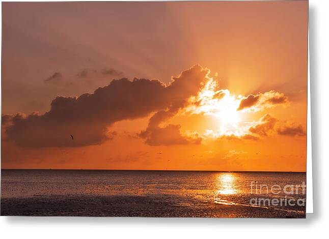 Best Sellers -  - Flying Seagull Greeting Cards - Sunset Greeting Card by Angela Doelling AD DESIGN Photo and PhotoArt