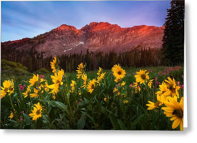 Little Cottonwood Canyon Greeting Cards - Sunset at Albion Basin Greeting Card by Rory Wallwork