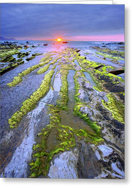 Alga Greeting Cards - Sunset At Barrika Coast With Rocks And Moss Greeting Card by Mikel Martinez de Osaba