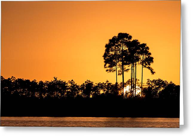 Silhouette Greeting Cards - Sunset at Long Pine Key Pond Greeting Card by Andres Leon