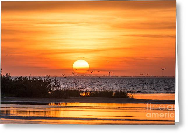 Pelicans Over Ocean Greeting Cards - Sunset at Padre Island Greeting Card by Tod and Cynthia Grubbs