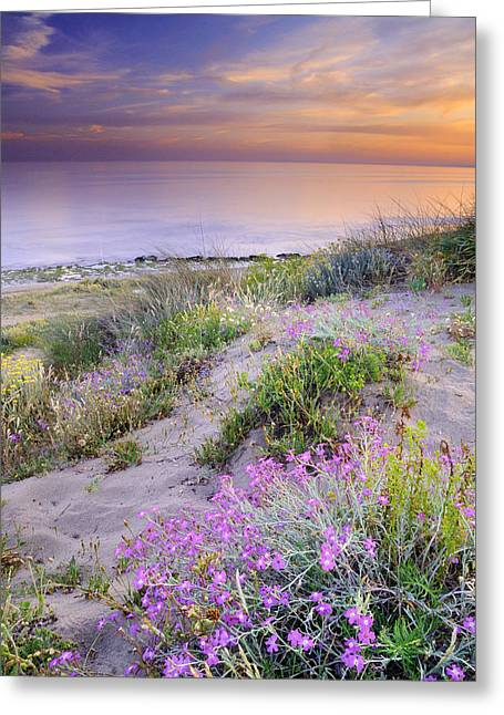 Blue Green Wave Greeting Cards - Sunset at the beach  Flowers on the sand Greeting Card by Guido Montanes Castillo
