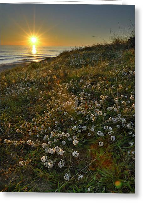 Blue Green Wave Greeting Cards - Sunset at the beach  White flowers on the sand Greeting Card by Guido Montanes Castillo
