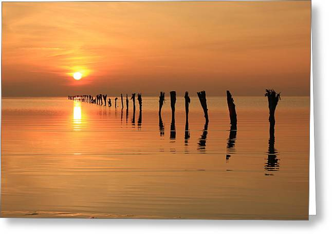 Amazing Sunset Greeting Cards - Sunset at the Fence Greeting Card by Johnny Adolphson