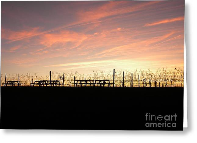 Childress Winery Greeting Cards - Sunset at the Vineyard Greeting Card by Jaclyn Hughes Fine Art
