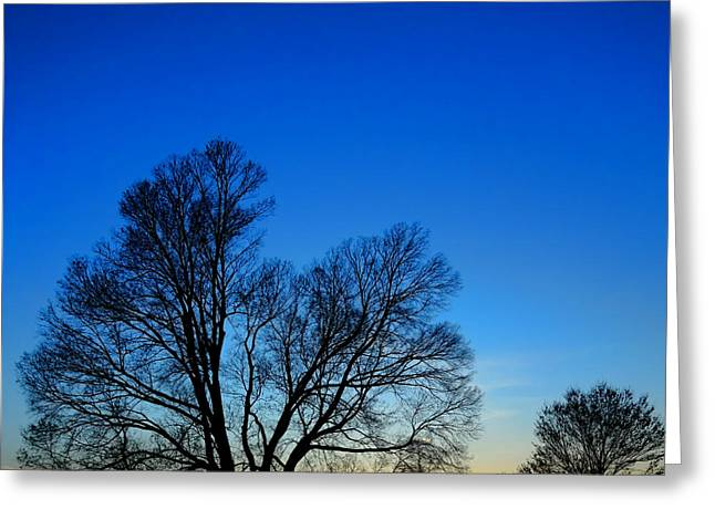Tress Greeting Cards - Sunset at Valley Forge Greeting Card by Olivier Le Queinec