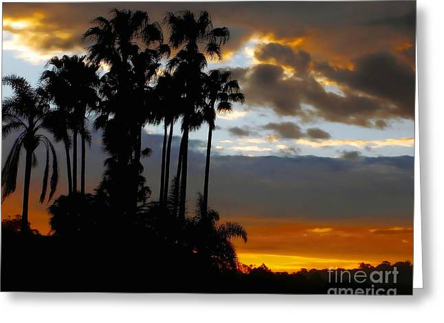 Silhouette Of Tree Greeting Cards - Sunset beyond the Palms Greeting Card by Kaye Menner