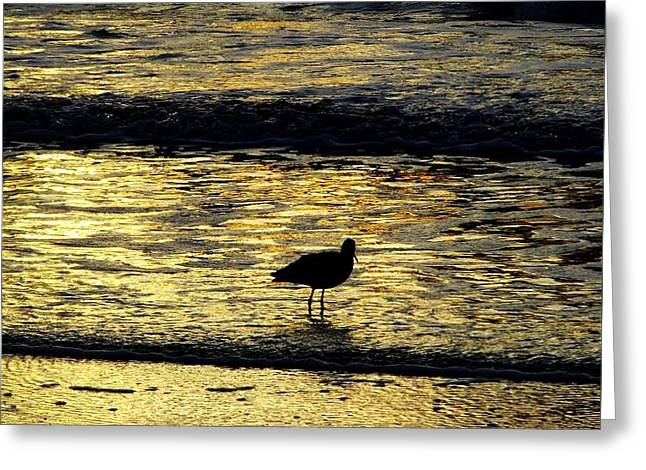 Tidal Photographs Greeting Cards - Sunset Bird Greeting Card by D Hackett