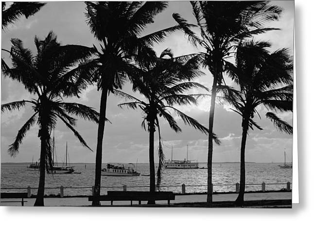 Biscayne Bay Greeting Cards - Sunset, Biscayne Bay, Miami, Florida, C.1910-20 Bw Photo Greeting Card by Detroit Publishing Co.
