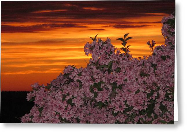 04003 Greeting Cards - Sunset Blooms Greeting Card by Donnie Freeman