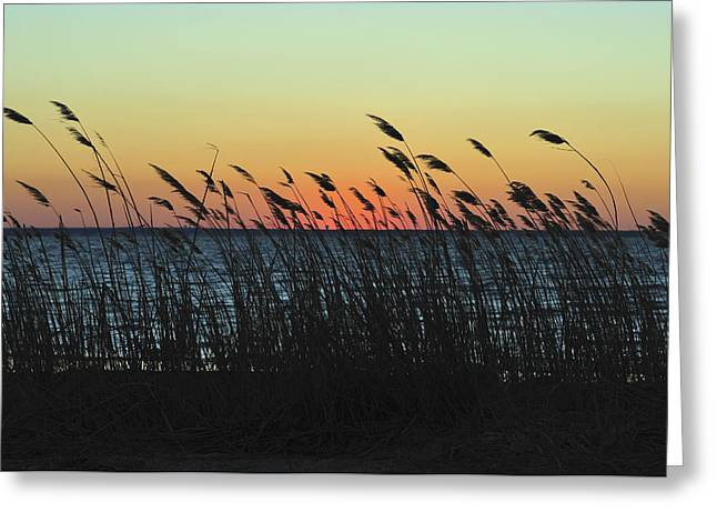 Sunset Bay State Park Greeting Cards - Sunset Colors Island Beach State Park NJ Greeting Card by Terry DeLuco