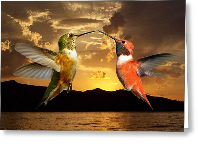 Sunset Courtship Greeting Card by David Salter