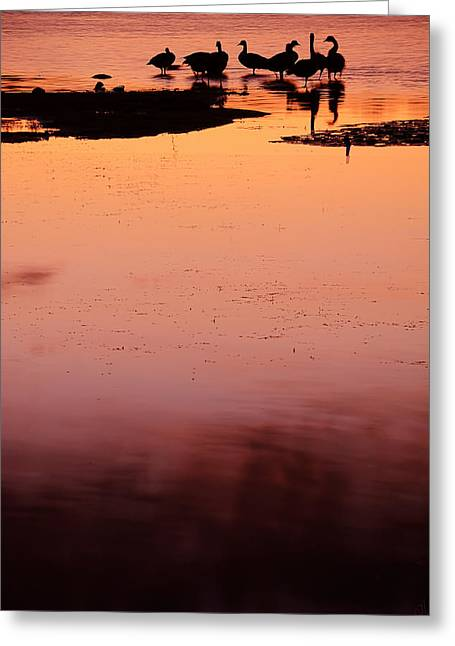 Flock Of Geese Greeting Cards - Sunset Discourse- Gorton Pond Warwick Rhode Island Greeting Card by Lourry Legarde