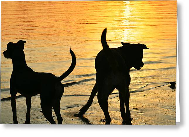 Dog Play Beach Greeting Cards - Sunset Dogs  Greeting Card by Laura  Fasulo