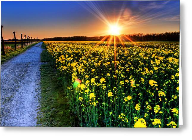 Clouds Greeting Cards - Sunset Field Greeting Card by EXparte SE