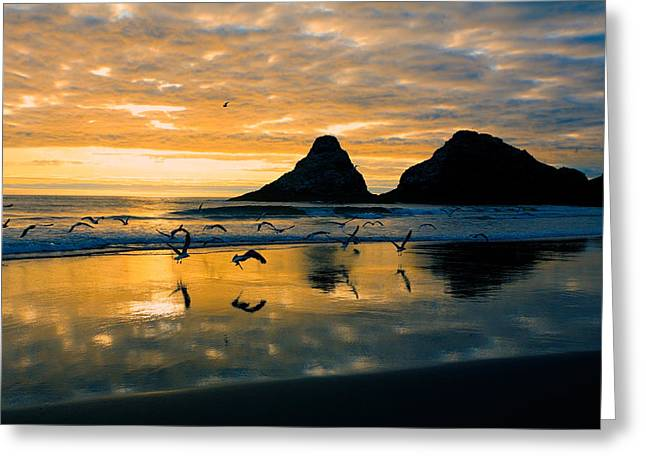 Flying Seagull Greeting Cards - Sunset Flight Greeting Card by Bonnie Bruno