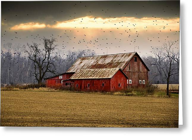 Old Barns Greeting Cards - Sunset Flight Greeting Card by David Mikautadze