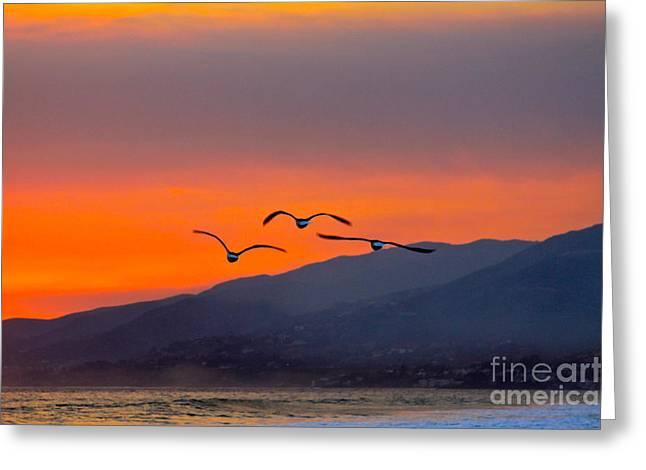 Gloaming Greeting Cards - Sunset Flight Greeting Card by Maureen J Haldeman