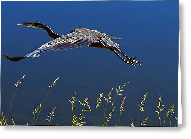 Hernia Greeting Cards - Sunset Flight Greeting Card by Sharon  Talson