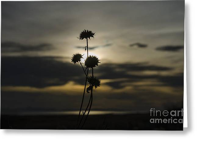 Sunset Flower Greeting Card by Nicole Markmann Nelson