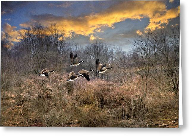 Geese Art Greeting Cards - Sunset Geese Greeting Card by Christina Rollo