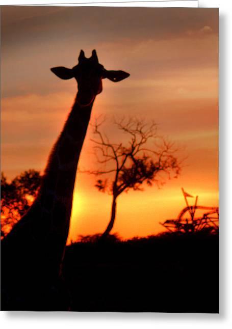 Sunset Greeting Cards Greeting Cards - Sunset Giraffe Greeting Card by Joseph G Holland