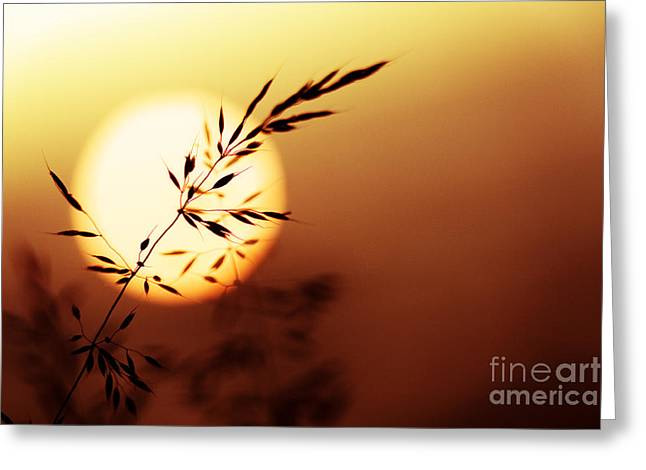 Seedhead Greeting Cards - Sunset Grass Greeting Card by Tim Gainey