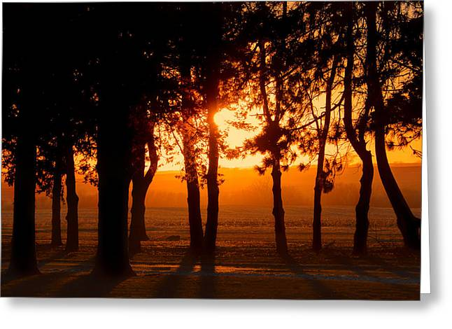 Midwinter Greeting Cards - Sunset Grove #1 Greeting Card by Nikolyn McDonald