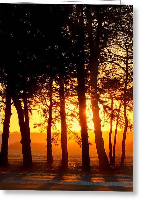 Midwinter Greeting Cards - Sunset Grove #2 Greeting Card by Nikolyn McDonald