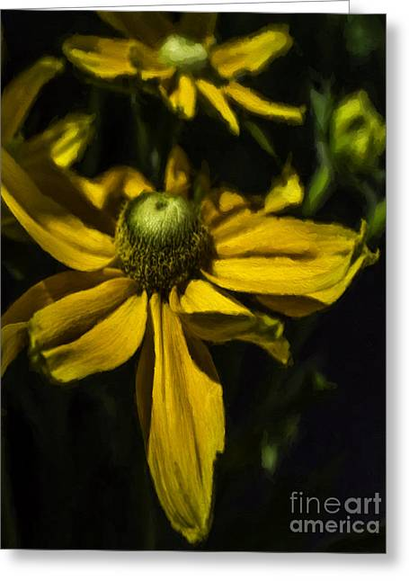 Sunlight On Flowers Greeting Cards - Sunset Healing Greeting Card by Jean OKeeffe Macro Abundance Art