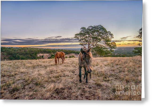Farmers Field Greeting Cards - Sunset Horses Greeting Card by Ray Warren