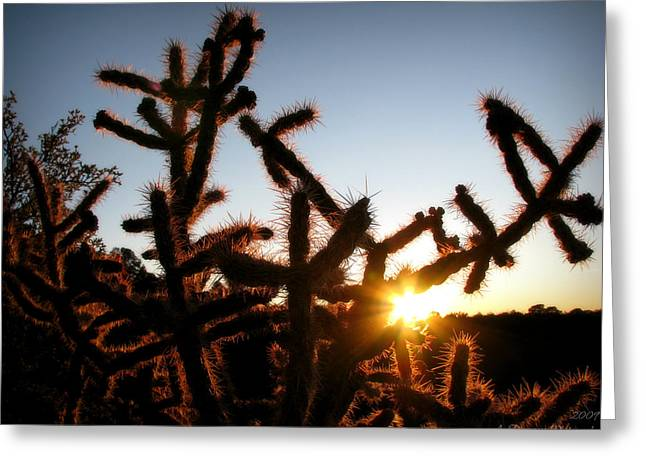Rincon Greeting Cards - Sunset in a Cholla Greeting Card by Aaron Burrows