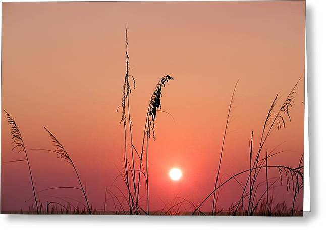 York Beach Digital Art Greeting Cards - Sunset in Tall Grass Greeting Card by Bill Cannon
