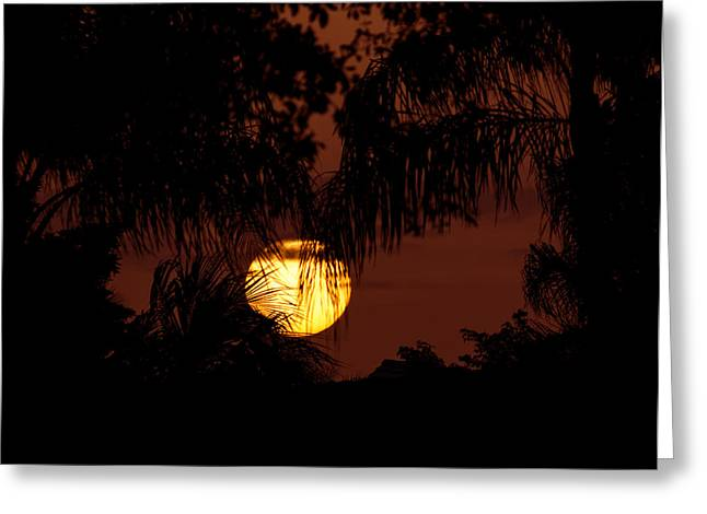 Sunset In The Glades Greeting Card by Mark Andrew Thomas