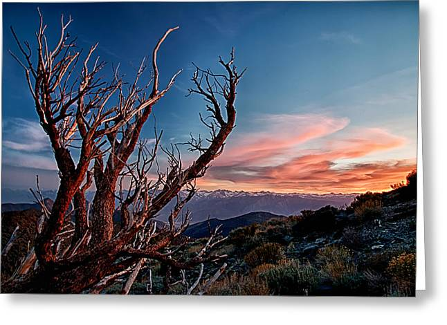Blue Red Trees Greeting Cards - Sunset in the Whites Greeting Card by Cat Connor
